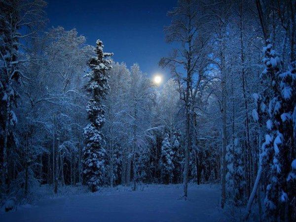 .....зимний лес.....
