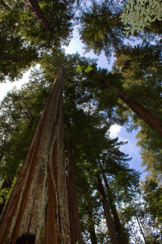 SOS séquoias