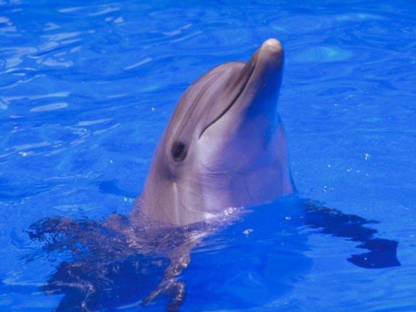 beau dauphin