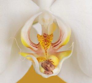"""Bébé dans une """"Orchidée"""""""