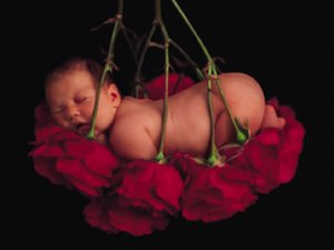 """Bébé dans les """"Roses"""""""