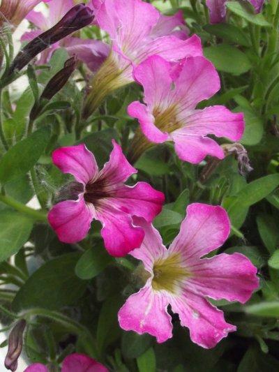 Fleur dans balconnière