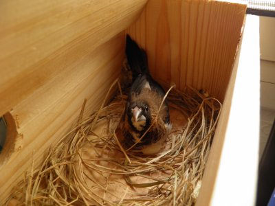 Primera nidada de este año