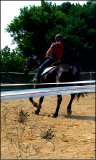 Photo de Horses-Perfection