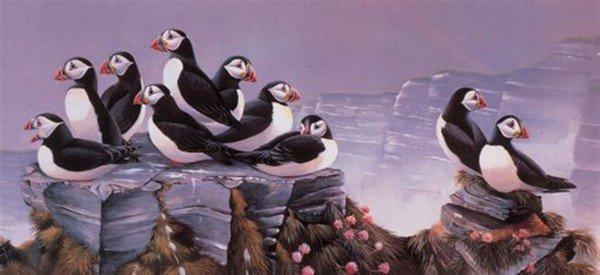 des petits oiseaux