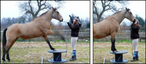 La remise en question est perpetuelle avec les chevaux !
