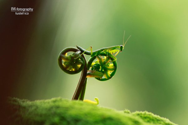 Le vélo pour sauterelle