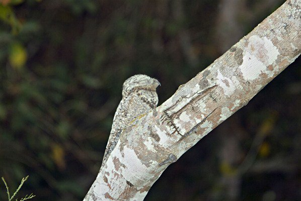 Camouflage (suite de la nouvelle série)