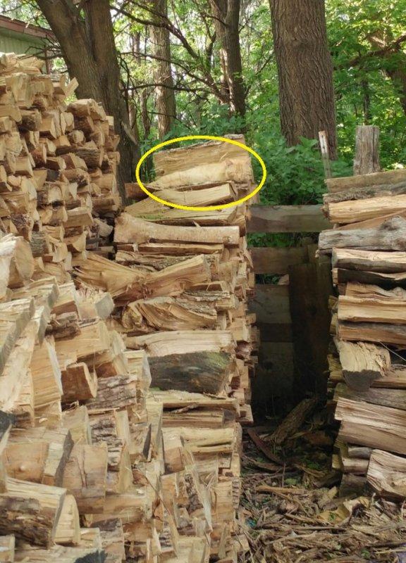 Où est le chat ? (suite)