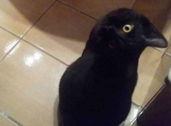 Un corbeau ?