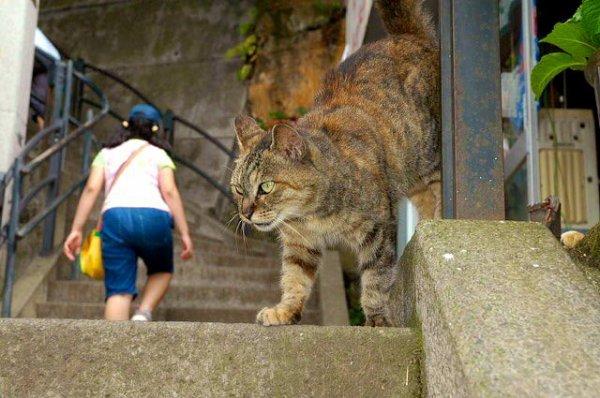 Un chat géant ?