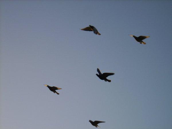 Volée des 6 premier jeunes