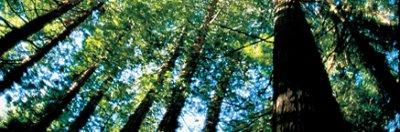 Dans 200 millions d'années: La forêt du Nord