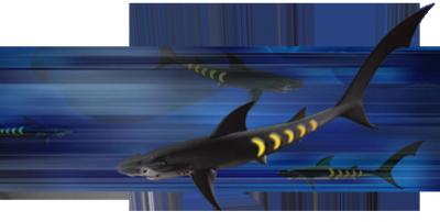 Requin-lumière