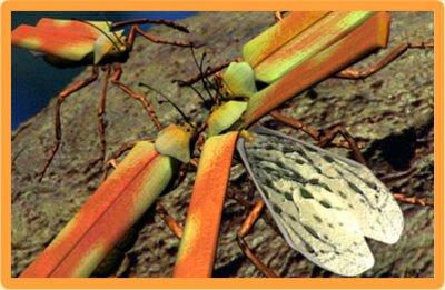 Scarabée crache-feu