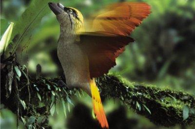 Oiseau crache-feu