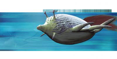 Flotteur des récifs