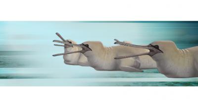 Fou-baleine