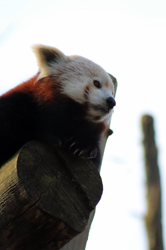 Zoo de Lille