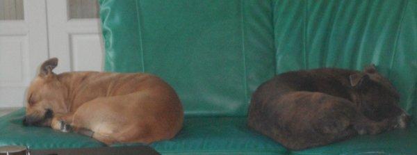 mes deux gros sur le canapé ^^