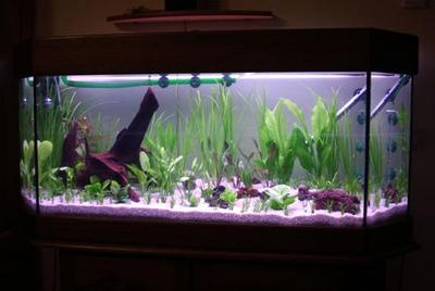 aquarium plant 02 cyberfish. Black Bedroom Furniture Sets. Home Design Ideas