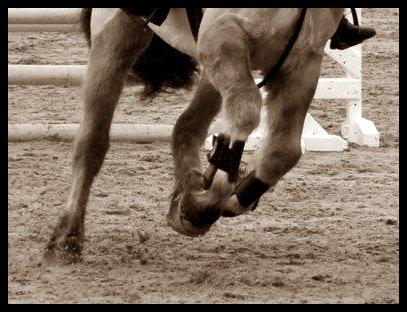 mon blog est destiné a mon poney Justin