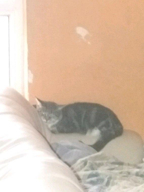 Moumou le chat