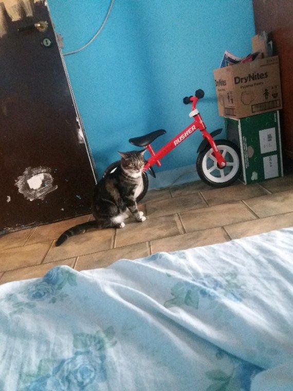 Mon chat moumou