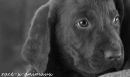 Photo de race-x-animaux