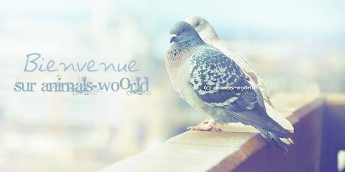 Bienvenue sur ANIMALS-WO0RLD ; Un blog plein d'animaux & de découverte ! ♥