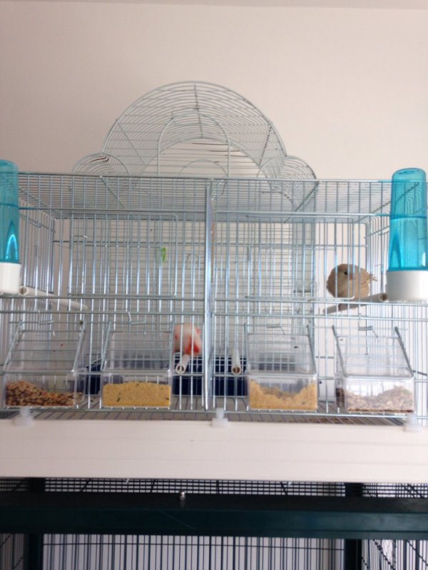 De retour de Belgique avec une nouvelle cage de nouveaux oiseaux nid ext payer ect ....
