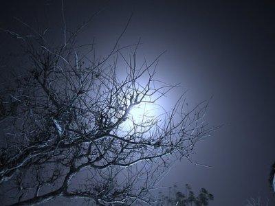 quand une nuit calme et paisible...