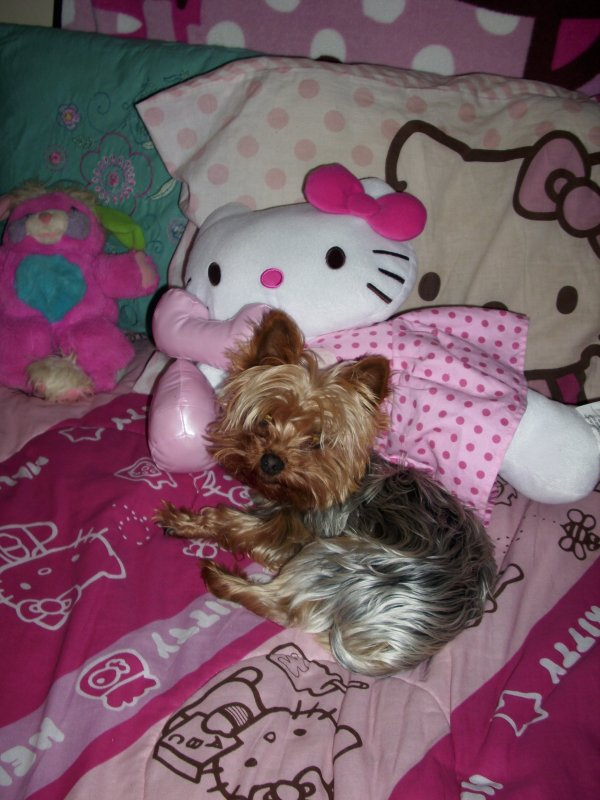 My baby Bandy-Bear on my Hello Kitty Bed! Isn't he the cutest! My Little Snuggle Wuzzle! I Love Him Sooo Much ;)