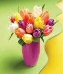 Photo de tulipomielle