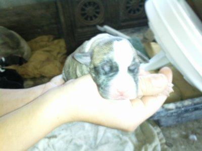 mon chien tout petit