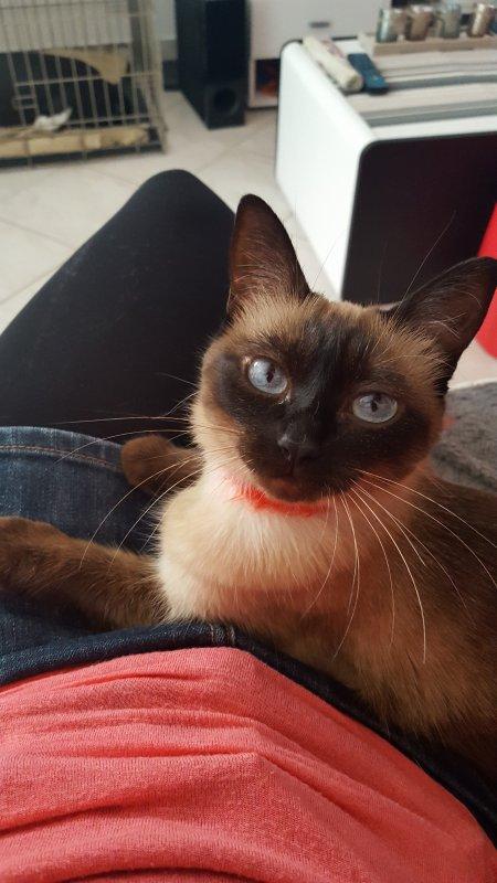 Mon ti chat ma fifille je l'aime trop