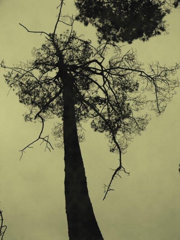 Cet arbre mort