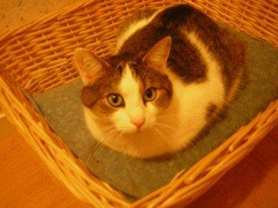 Mllex-Chupas-Chups Elfy(mon 1er chat):