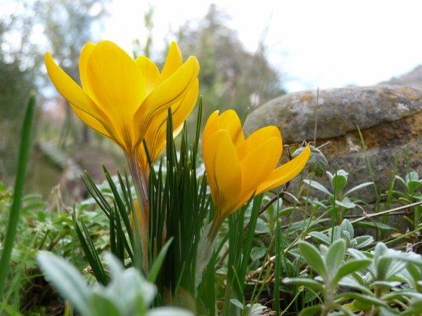 printemps renaissance...
