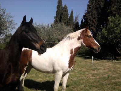 Au fond, les cavaliers passionés restent les gamins qui rêvent de leur poney.
