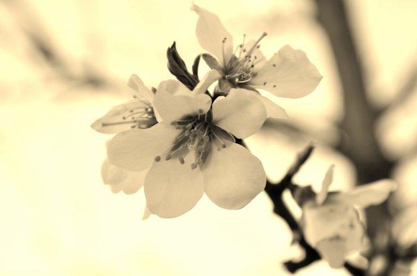 """""""Les mots que l'on n'a pas prononcés sont les fleurs du silence.""""                                            Proverbe chinois"""