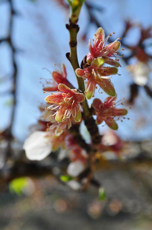 « La vie, c'est comme une fleur qui perd ses pétales. »  Proverbe québécois
