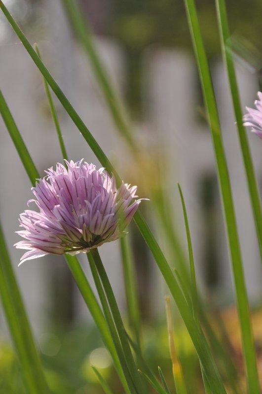 « Le printemps, c'est tout un poème. On en parle, on le pratique, on l'attend... » Alphonse Boudard