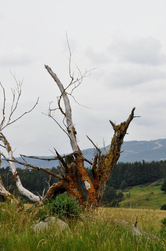 « Les montagnes sont des géants assoupis. (...) Peut-être que nous ne sommes que leur rêve, un rêve de la terre somnolente.»  Théodore Roszak Extrait  des Mémoires d'Elizabeth Frankenstein