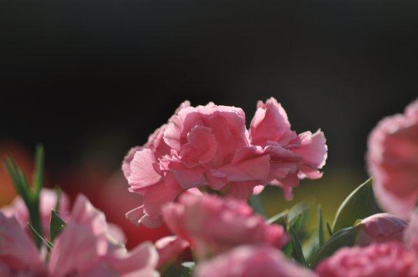« Pour leurrer le monde, ressemble au monde ; ressemble à l'innocente fleur, mais sois le serpent qu'elle cache. »  William Shakespeare