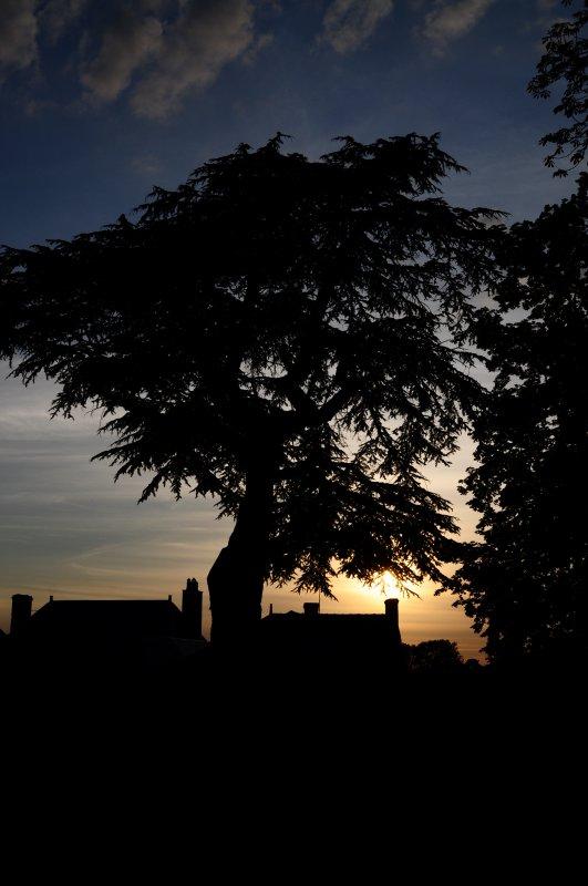 « Ne coupe pas l'arbre qui te donne de l'ombre. » Proverbe arabe