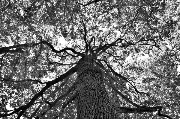 """""""Chaque arbre est le symbole vivant de la paix et de l'espoir.""""  Wangari Muta Maathai"""