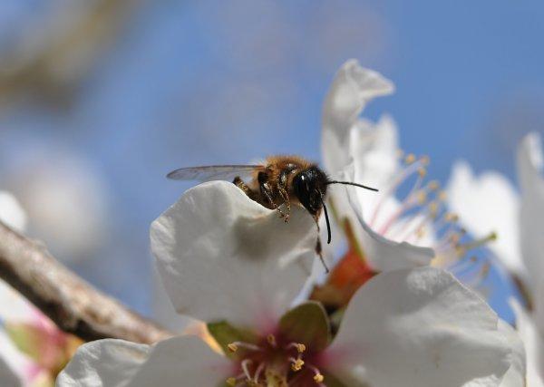 """""""Le bonheur pour une reine abeille est d'exister. Pour l'homme, c'est de le savoir et de s'en émerveiller"""" Jacques-Yves Cousteau"""