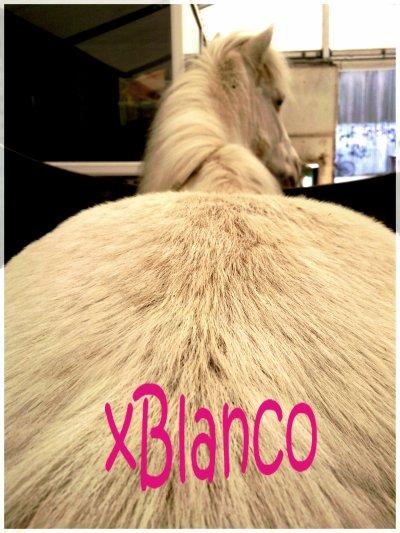 ♦ Blaanco & C'est Tout ! ♥