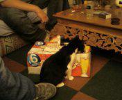 le chat alcoolique